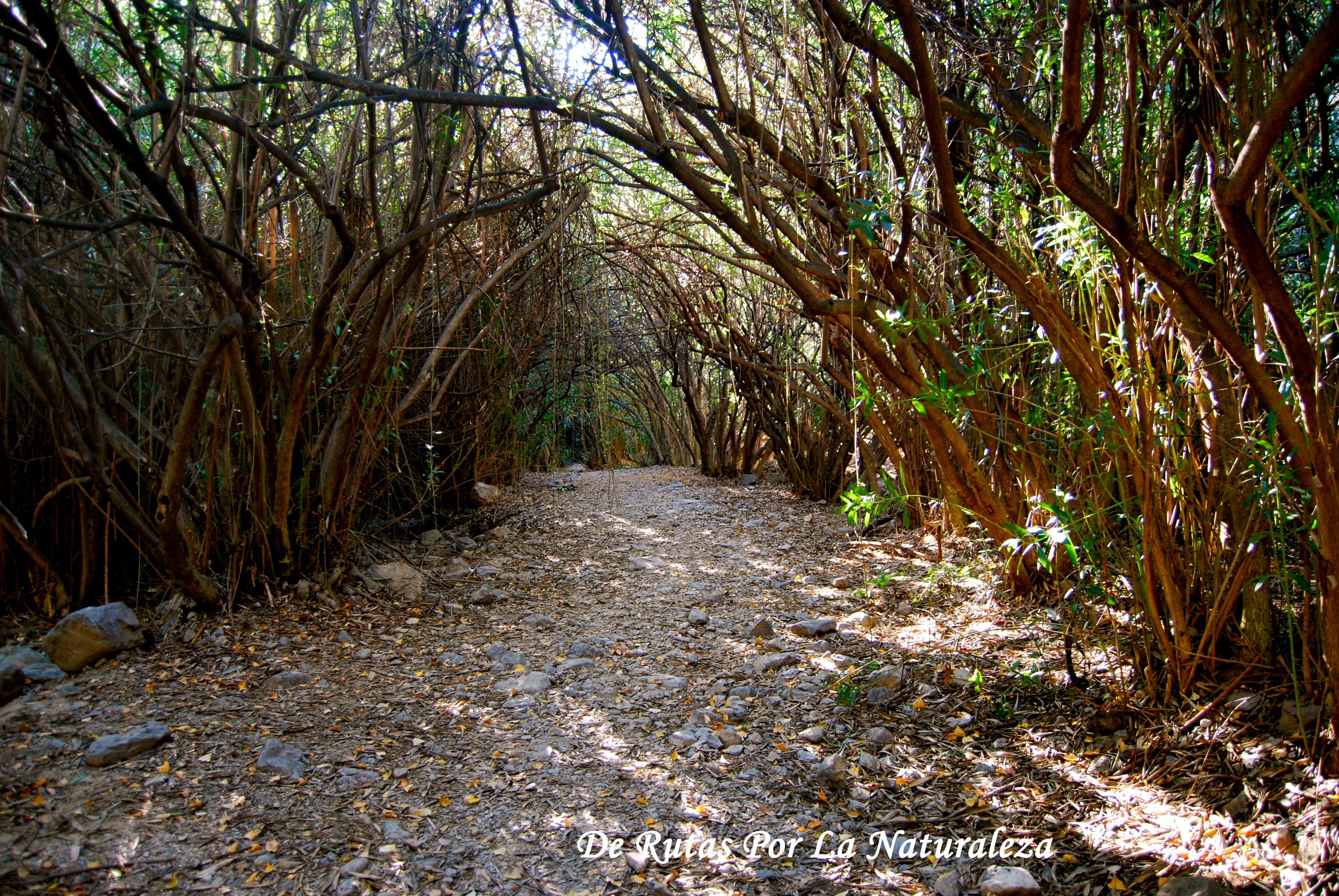 Adelfal de cuadros (Sierra Mágina) – De rutas por la naturaleza
